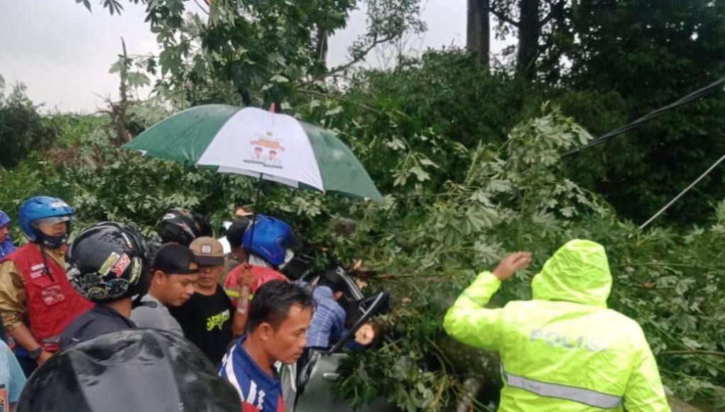 Kecelakaan Pohon tumbang di Semingkir